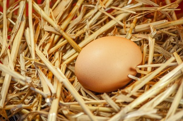 Easter Egg Nest Easter Egg